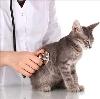 Ветеринарные клиники в Красной Горбатке